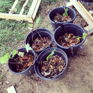 Planting some seedlings ready for next spring.