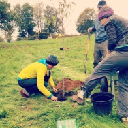 Planting the first round of trees for the food forest