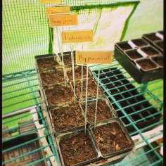 Grow little seedlings...