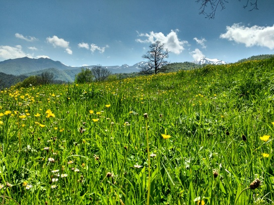 BEautiful meadows in full bloom