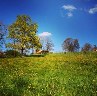 Delightful springtime at Les Vignes Basses