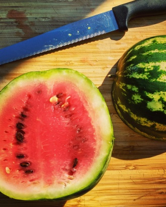 Yummy....watermelon harvest.