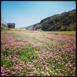 Spectacular valleys in Kyushu