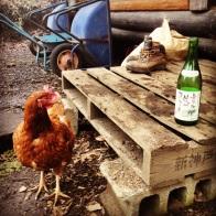 Chicken or wine??