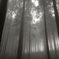 Spooky forests