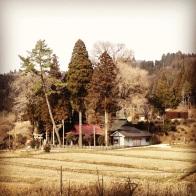 Walks to the local shrine