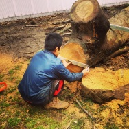 Sizing up an enormous log to cut into planks...