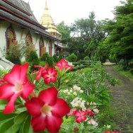 Chang Mai, Thailand