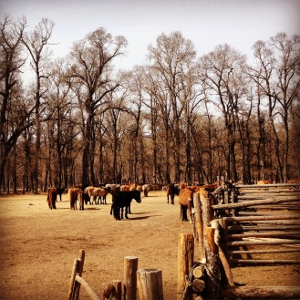 Our host's herd of horses, which they bred and sold handsomely