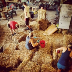 Busy busy bees. All six of us working in 35 degree heat to make the bales ready for the ball.