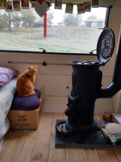 Whiskles and our favourite item, the stove. Sometimes Whisky doesn't understand why it isn't working and paws at it as though he's trying to find the on button.